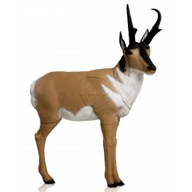 Delta Antelope