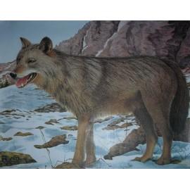 JVD grand gibier Loup
